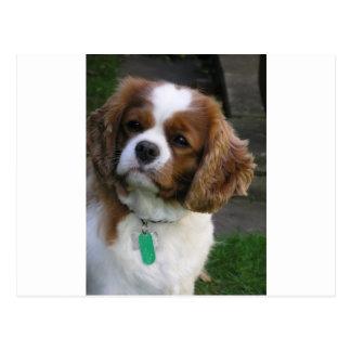 O cão o mais bonito no mundo cartão postal