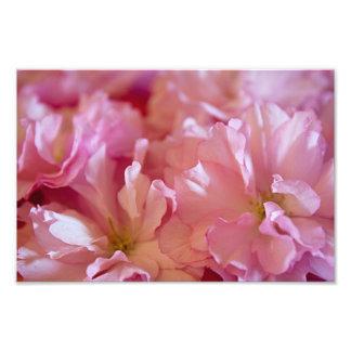 O caranguejo cor-de-rosa Apple do primavera Impressão De Foto