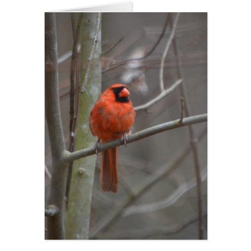 O cardeal vermelho alegre envia seu amor cartão