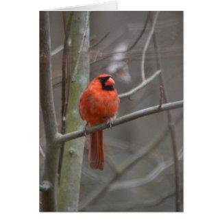 O cardeal vermelho alegre envia seu amor cartão comemorativo
