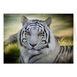O cartão branco do tigre (v2) personaliza