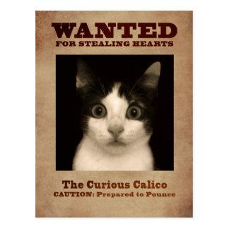 O cartão curioso do gatinho da chita