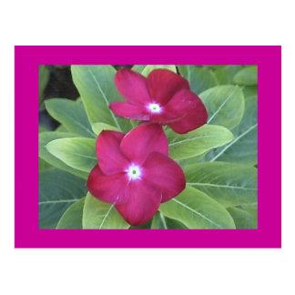 ò Cartão da flor
