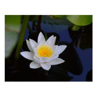 O cartão de Lotus branco