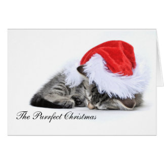 O cartão de Natal do purrfect