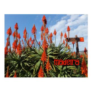 O cartão do aloés de Madeira, personaliza