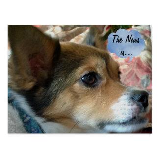 O cartão do cão da notícia