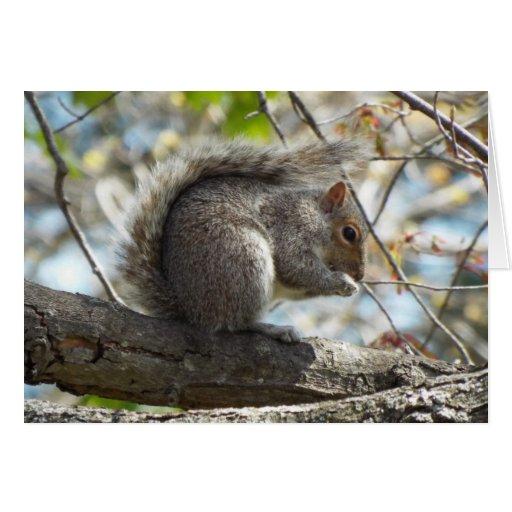 O cartão do pequeno almoço dos esquilos