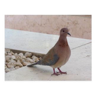 O cartão do pombo, personaliza