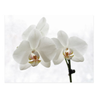 O cartão dos namorados brancos das orquídeas