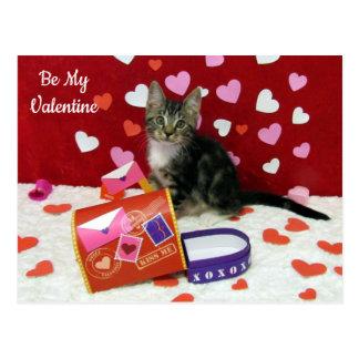 O cartão dos namorados do bandido (gatinho do gato