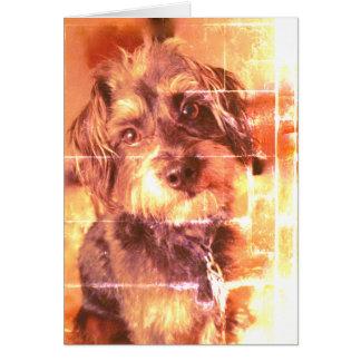O cartão vazio do cão