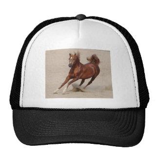 O cavalo de galope da castanha de Brown retrocede  Boné