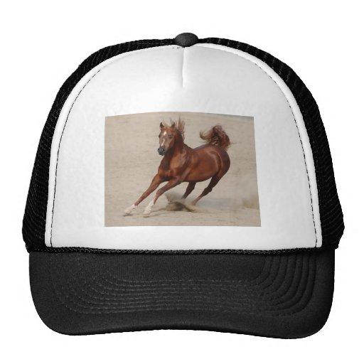 O cavalo de galope da castanha de Brown retrocede  Bones