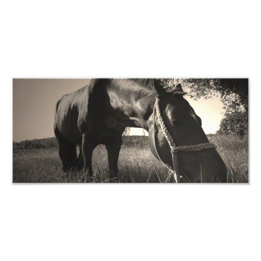 O cavalo descansa a foto preto e branco
