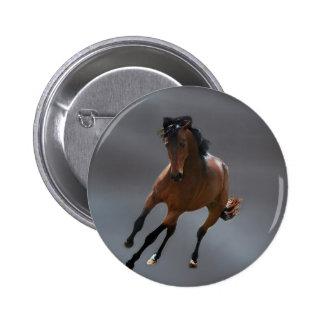 O cavalo do vaqueiro chamou Riboking Botons