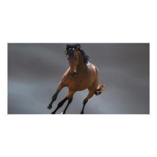 O cavalo do vaqueiro chamou Riboking Cartao Com Foto
