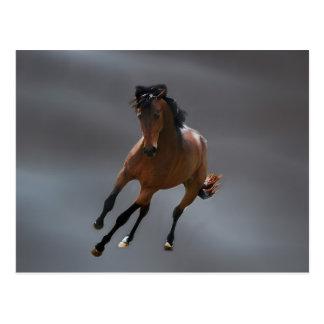 O cavalo do vaqueiro chamou Riboking Cartões Postais