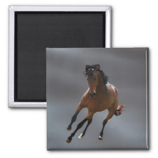 O cavalo do vaqueiro chamou Riboking Imas
