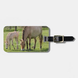 O cavalo e o potro de Przewalski que pastam Etiqueta De Bagagem