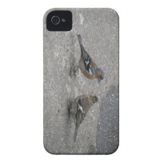 O Chaffinch alimenta-me Blackberry caso corajoso Capas Para iPhone 4 Case-Mate
