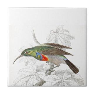 O colibri
