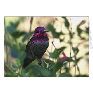 O colibri de Anna - Joe Sweeney - cartão