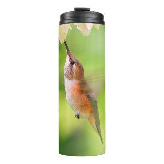 O colibri Rufous sorve o néctar da flor do mirtilo