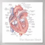 O coração humano posteres