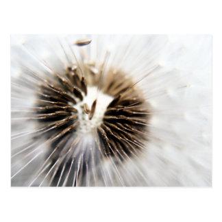O dente-de-leão semeia o cartão - macro cartoes postais