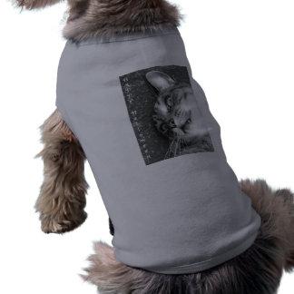 O Dia das Bruxas feliz Roupa Para Cães