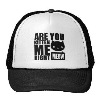 O divertimento é você gatinho mim chapéu direito boné