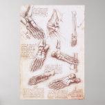 O esqueleto do pé humano da anatomia desossa da Vi Pôsteres