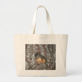 O esquilo de Douglas, cascatas de Oregon Bolsa