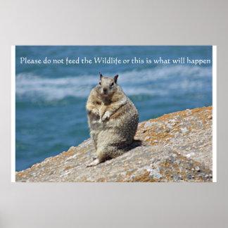 O esquilo gordo não alimenta o poster dos animais