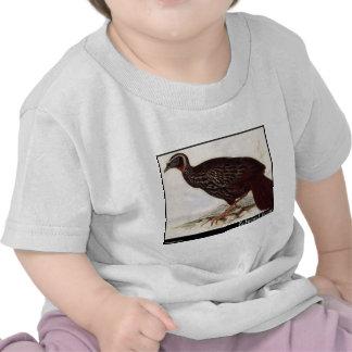 O Eyebrowed Guan de Edward Lear Tshirt