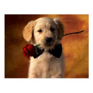 O filhote de cachorro do golden retriever traz um cartão postal