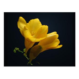 O Freesia amarelo floresce cartão