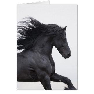 O frisão preto funciona o cartão do cavalo