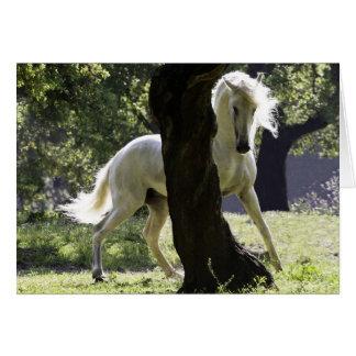 O garanhão e o cartão do cavalo da árvore