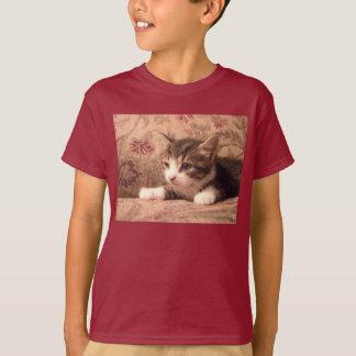 O gatinho cardinal caçoa a camisa
