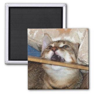 O gatinho Chomp o ímã Ímã Quadrado