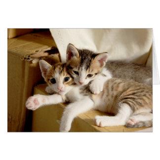 O gatinho junta obrigados para ser meu cumprimento cartão comemorativo