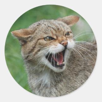 O gatinho não é etiquetas divertidas adesivo