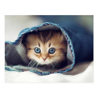 O gatinho o mais bonito do mundo nos jeans cartão postal