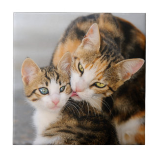 O gato da mãe ama o gatinho bonito, cerâmico azulejo quadrado pequeno