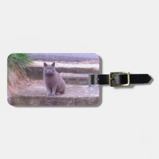 O gato do cinza dos vizinhos etiqueta de bagagem