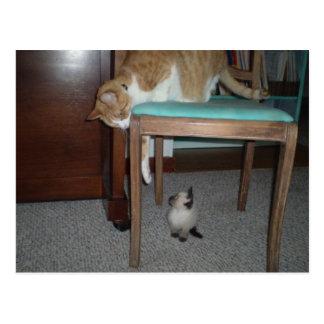 O gato grande vê o cartão pequeno do gatinho