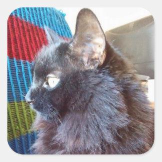 O gato preto caçoa a etiqueta