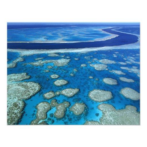 O grande recife de coral convite